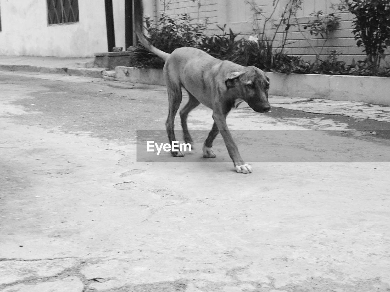 Dog Animal Pets One Animal Domestic Animals Outdoors Animal Themes Day Pet Portraits