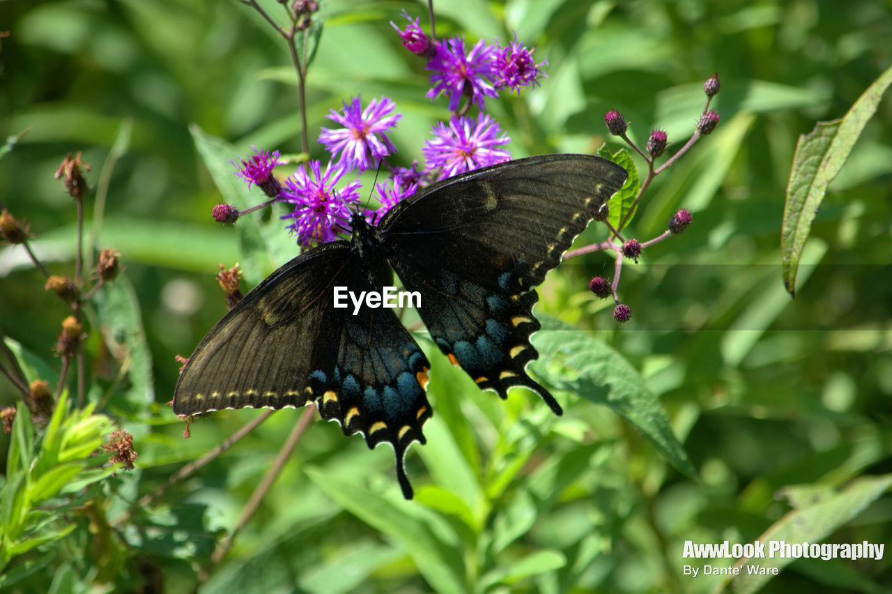 butterfly - insect, insect, animals in the wild, animal themes, one animal, animal wildlife, butterfly, outdoors, freshness, nature, growth, day, pollination, no people, plant, beauty in nature, fragility, flower, close-up, leaf, spread wings, perching, full length, flower head