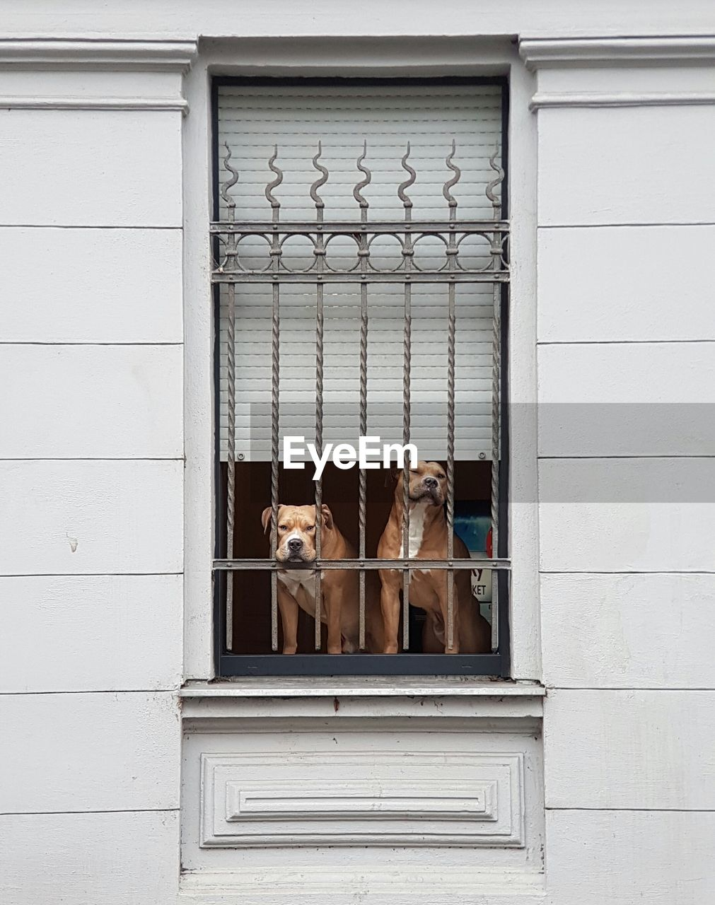 Dogs Looking Through Window