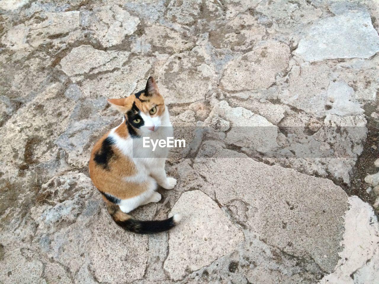 Portrait Of Cat Sitting On Rock