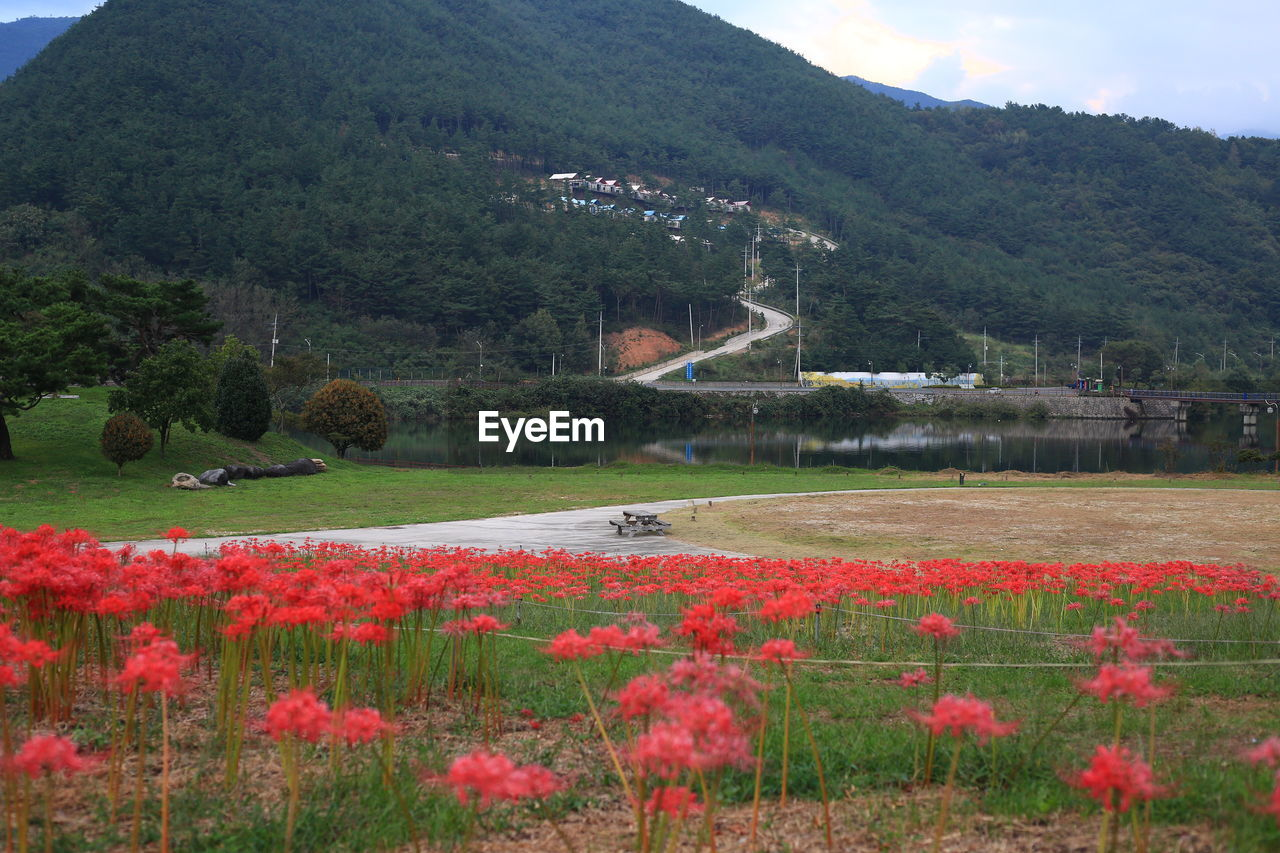 Scenic view of flowering plants by land against mountains