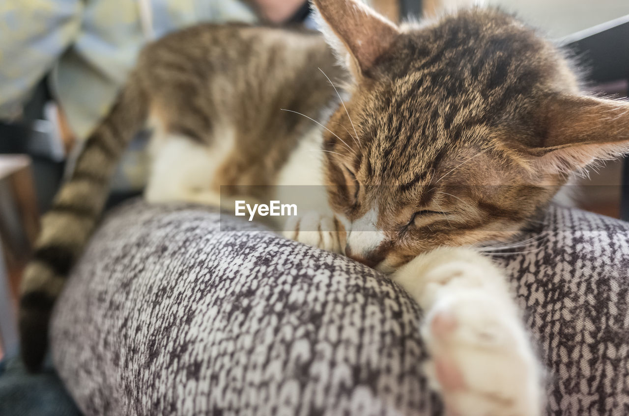 domestic, mammal, animal, domestic animals, animal themes, pets, cat, vertebrate, feline, one animal, domestic cat, relaxation, selective focus, eyes closed, sleeping, close-up, resting, real people, indoors, unrecognizable person, whisker, tabby