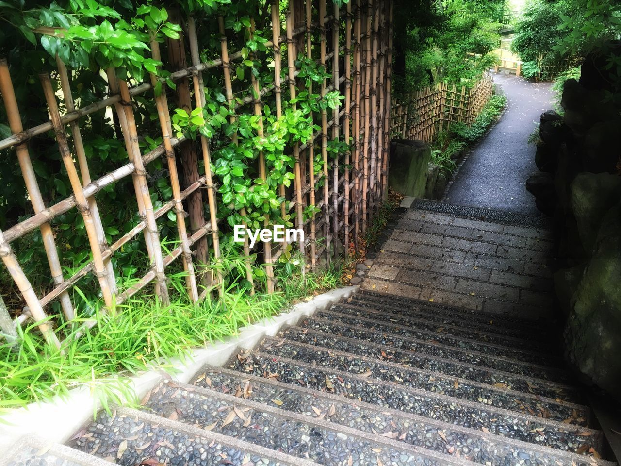 steps, the way forward, railing, day, plant, no people, nature, outdoors, walkway, built structure, architecture