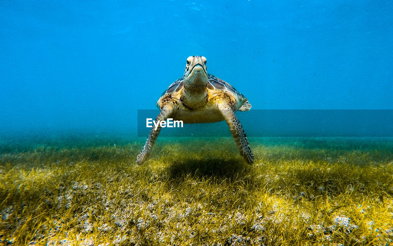 Sea Turtle Swimming Underwater