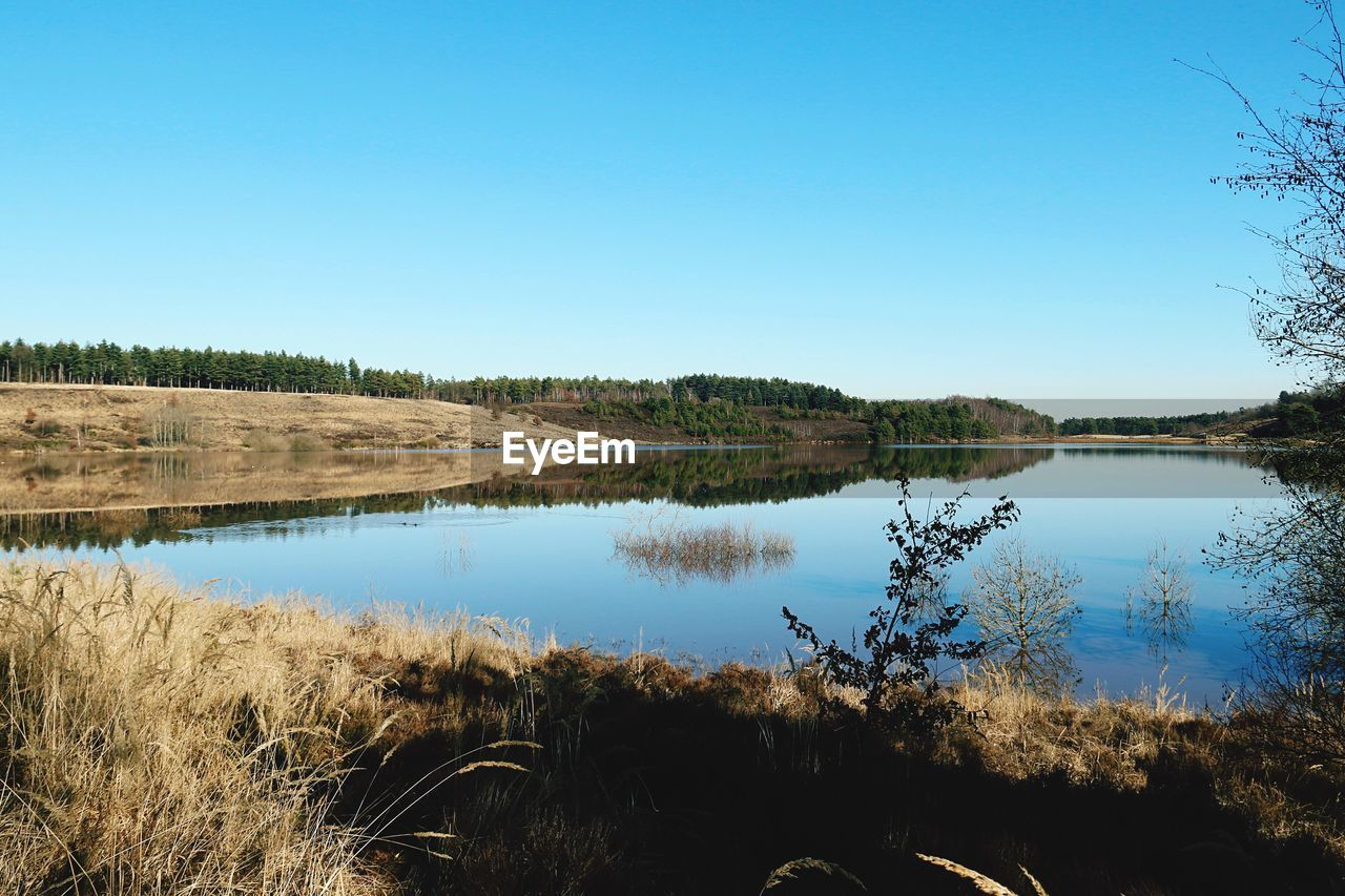 sky, water, lake, tranquility, tranquil scene, plant, scenics - nature, copy space, blue, clear sky, beauty in nature, reflection, nature, tree, no people, landscape, day, non-urban scene, environment, outdoors