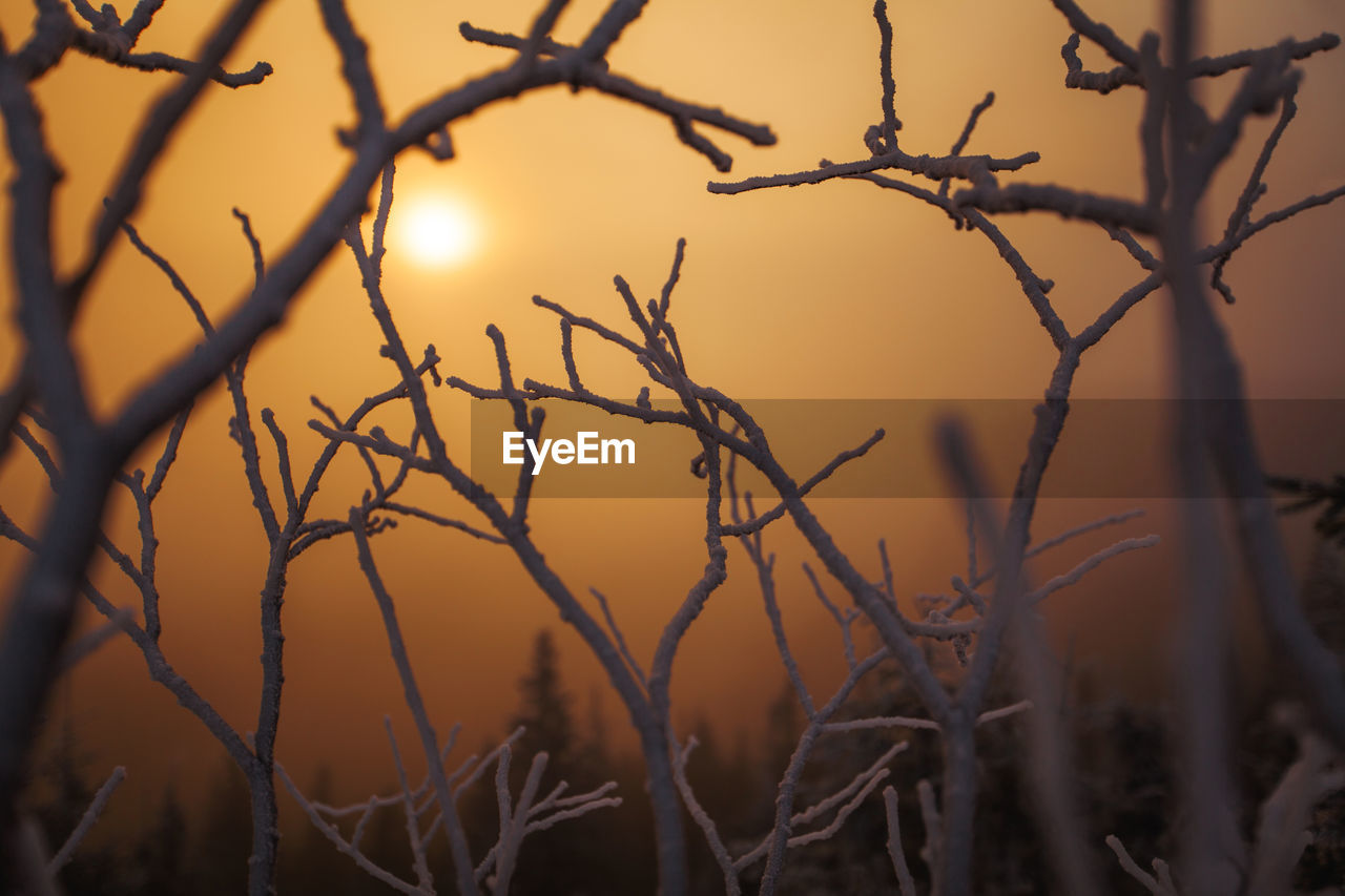 Close-up of frozen bare trees against sky during sunset