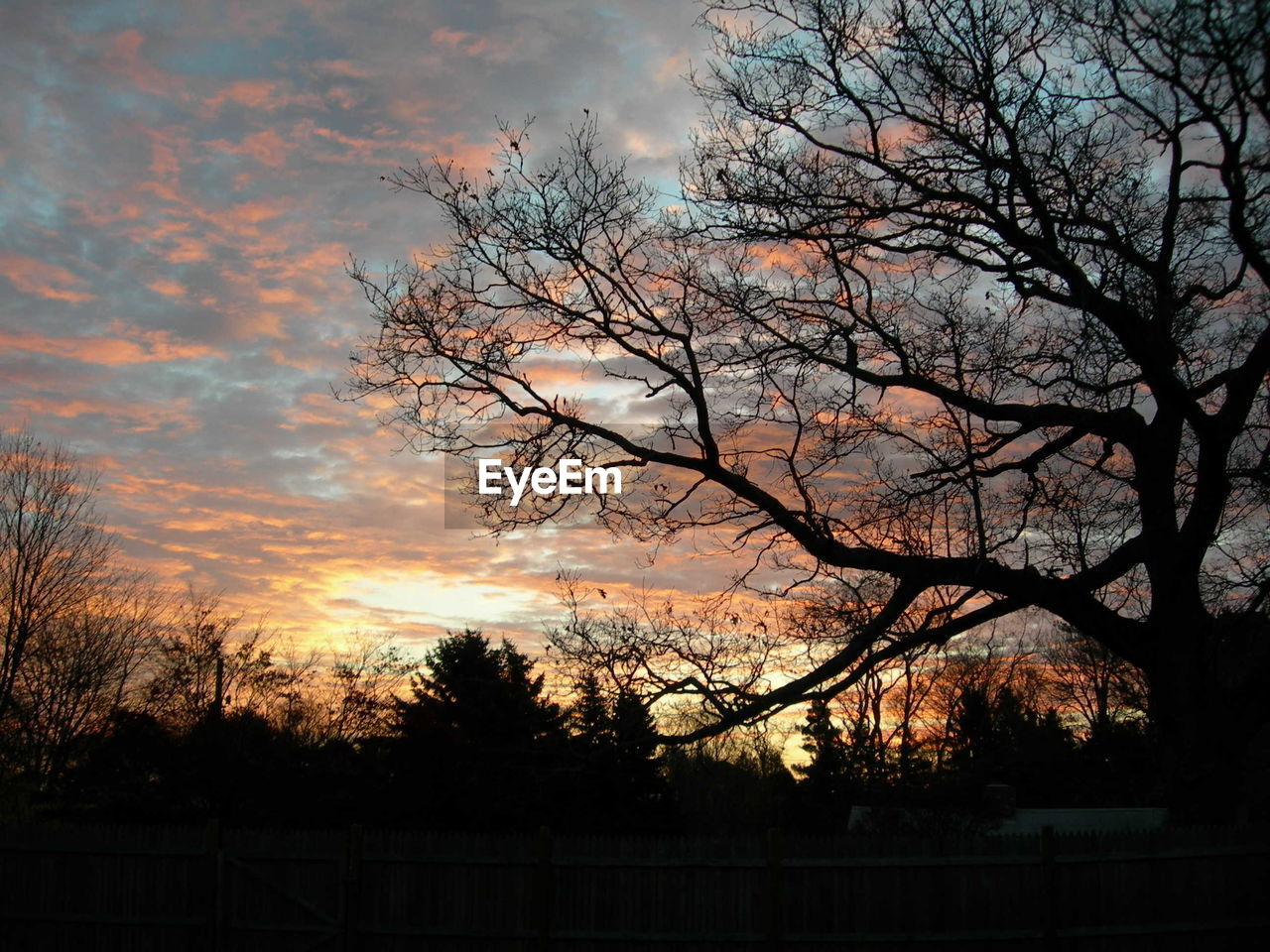 tree, sunset, sky, plant, cloud - sky, silhouette, beauty in nature, nature, no people, tranquility, scenics - nature, bare tree, branch, tranquil scene, orange color, outdoors, dusk, environment, growth, landscape