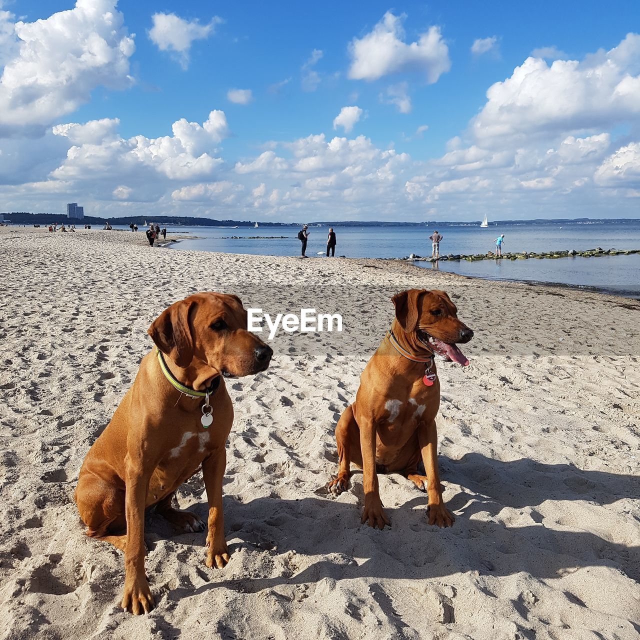 dog, pets, domestic animals, animal themes, mammal, sky, sea, sand, day, outdoors, nature, beach, sunlight, cloud - sky, no people, water, sitting, full length, togetherness, horizon over water