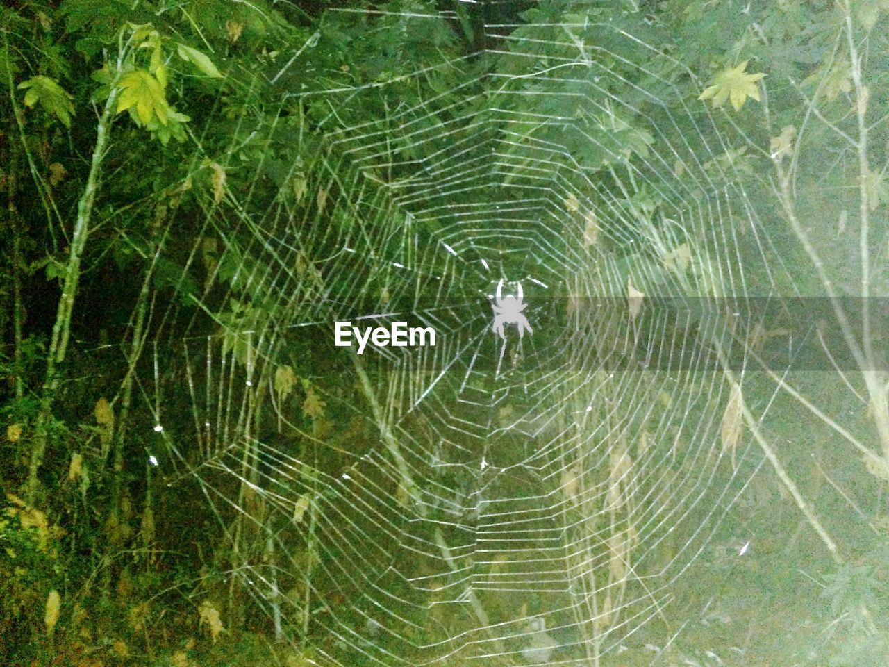 spider, spider web, web, one animal, animal themes, fragility, animals in the wild, nature, outdoors, no people, animal wildlife, day, close-up, backgrounds, full frame, beauty in nature