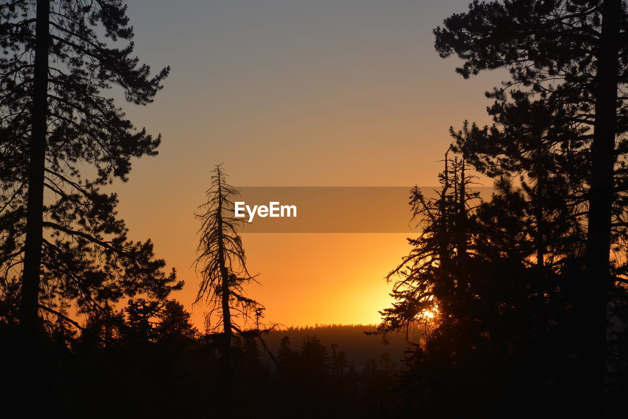 sunset, tree, silhouette, orange color, nature, beauty in nature, tranquil scene, sky, no people, scenics, tranquility, growth, outdoors, clear sky, day