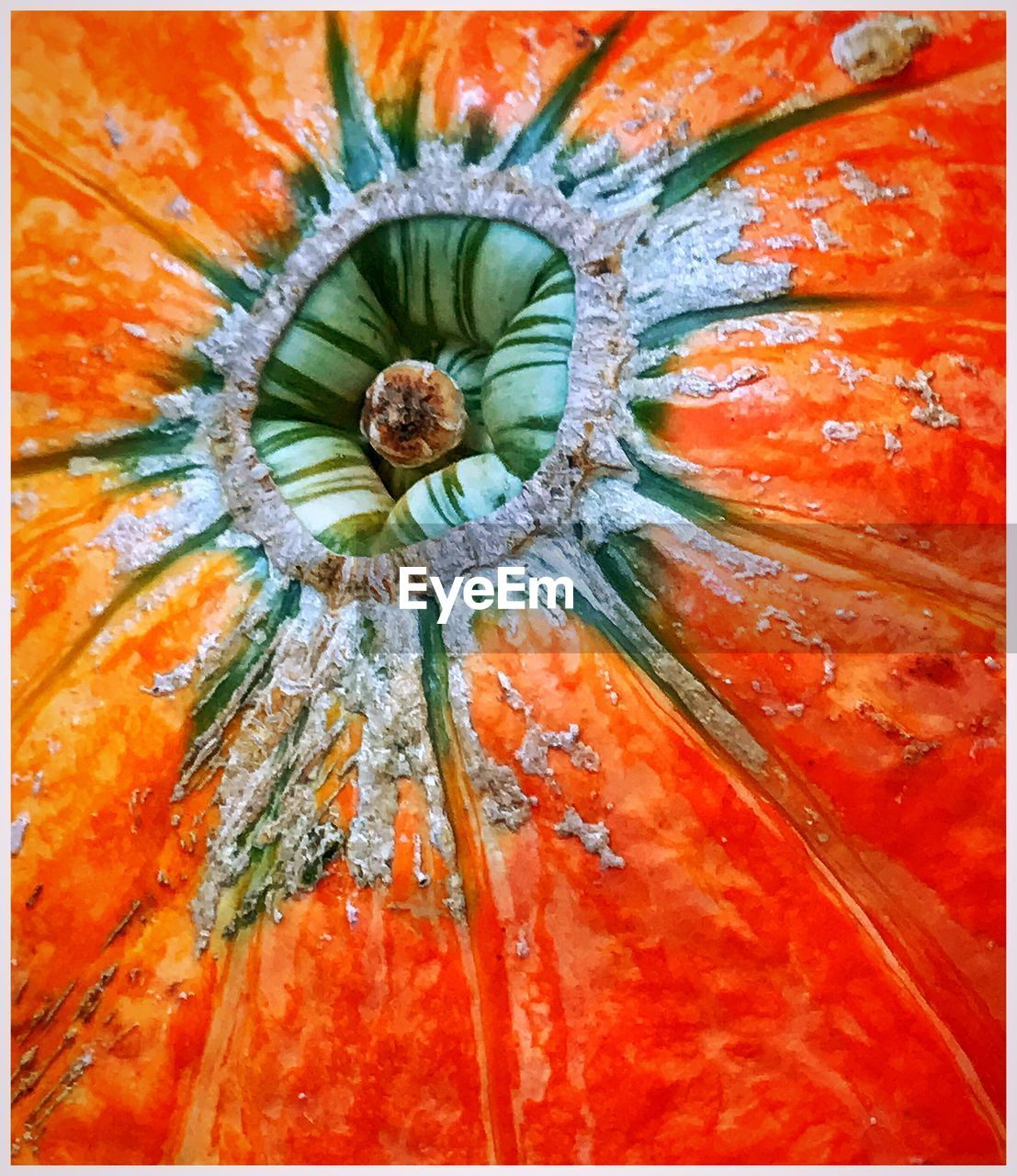 orange color, freshness, full frame, flower, backgrounds, no people, close-up, fruit, food and drink, growth, nature, food, beauty in nature, plant, flower head, fragility, day, indoors, healthy eating