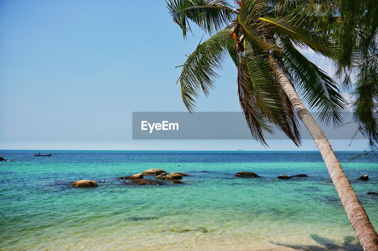 sea, scenics, horizon over water, nature, water, beauty in nature, tranquil scene, palm tree, tranquility, day, no people, sky, outdoors, tree, clear sky, animal themes, mammal