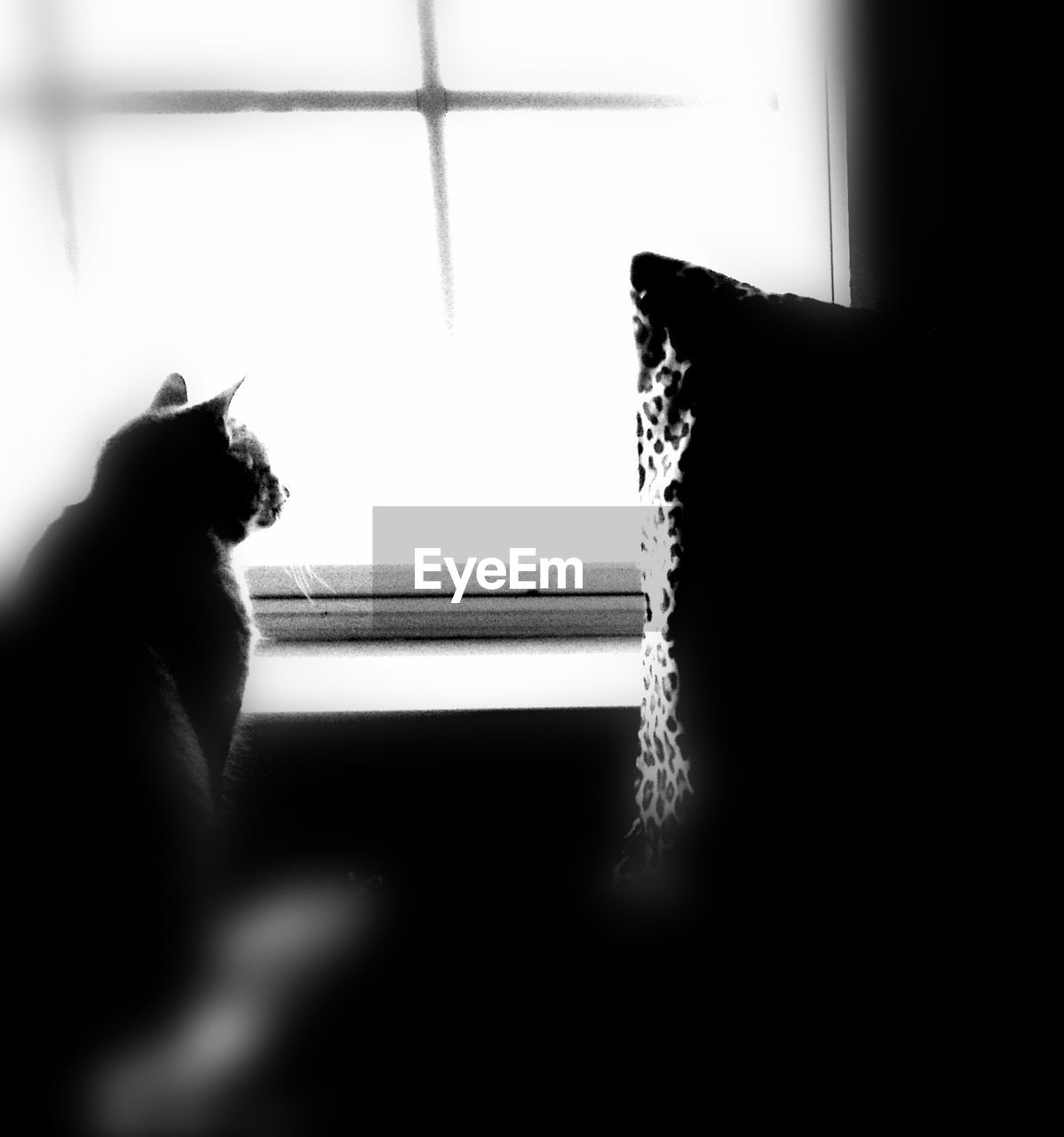 mammal, window, domestic animals, pets, domestic, one animal, cat, indoors, feline, domestic cat, vertebrate, one person, silhouette, day, home interior, real people, human hand, hand