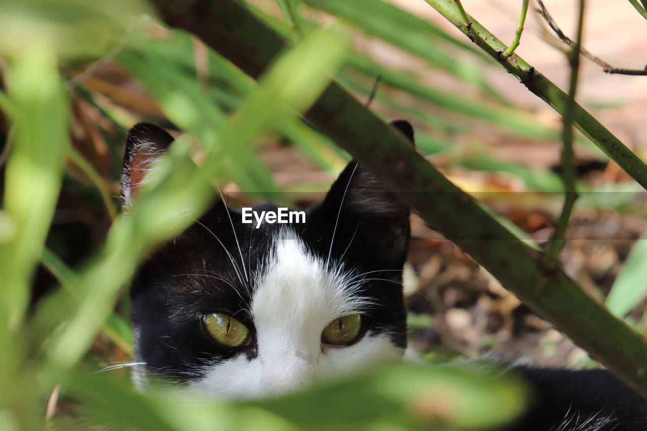 cat, domestic cat, animal themes, feline, pets, animal, one animal, domestic, domestic animals, mammal, vertebrate, looking at camera, portrait, black color, selective focus, no people, close-up, animal body part, nature, day, whisker, animal eye, animal head, yellow eyes