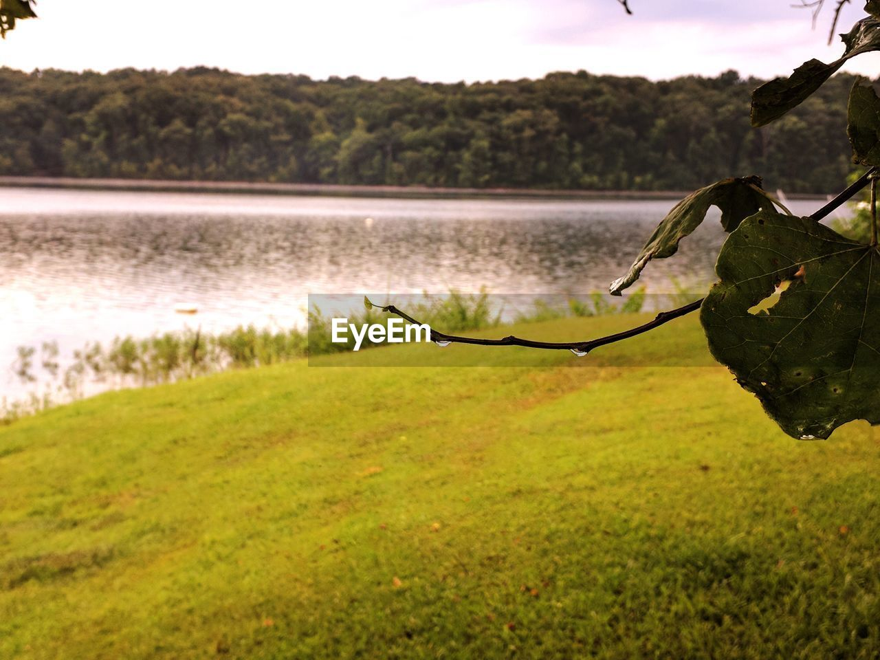 plant, water, lake, tranquility, beauty in nature, grass, nature, tree, tranquil scene, no people, scenics - nature, day, green color, growth, focus on foreground, land, outdoors, plant part, sky, leaves