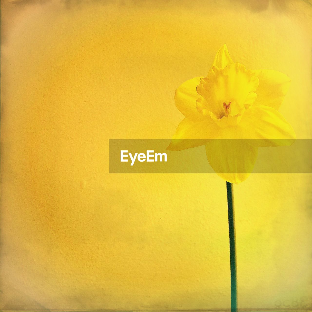 flower, petal, fragility, yellow, flower head, freshness, beauty in nature, nature, close-up, no people, growth, plant, blooming, outdoors, day