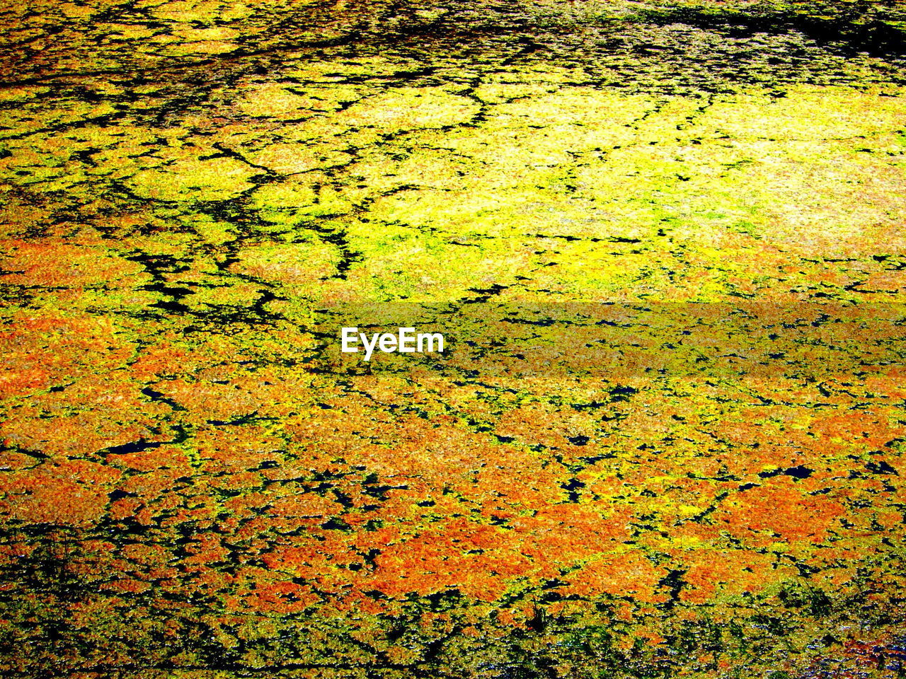 Close-up of algae in water