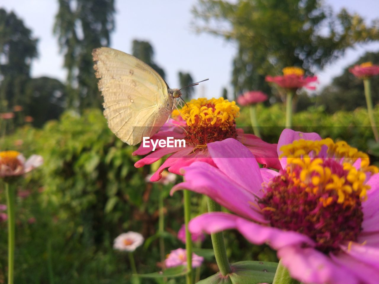 flower, growth, fragility, nature, freshness, plant, petal, focus on foreground, beauty in nature, animal themes, insect, no people, animals in the wild, day, outdoors, one animal, pink color, flower head, park - man made space, close-up, blooming, butterfly - insect, yellow, pollination, eastern purple coneflower