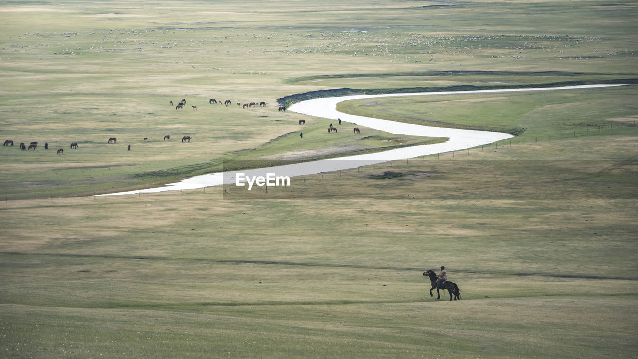High angle view of man riding horse on grassy hill