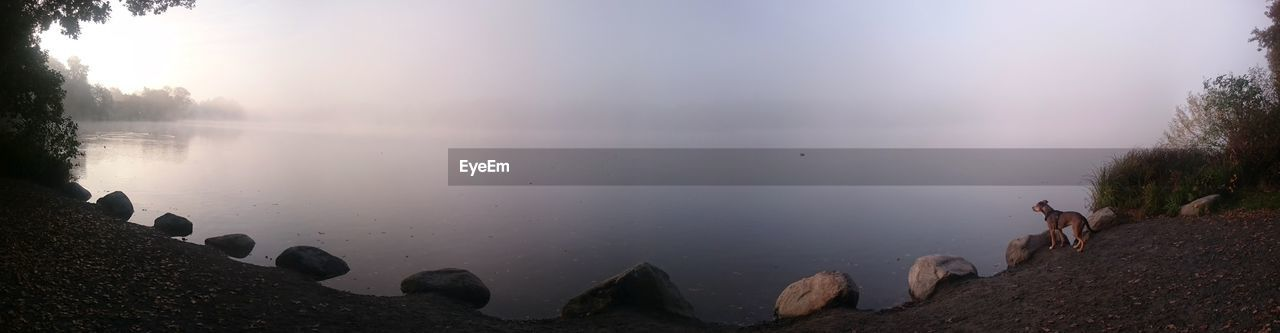Panoramic View Of Dog Standing By Lake During Foggy Weather