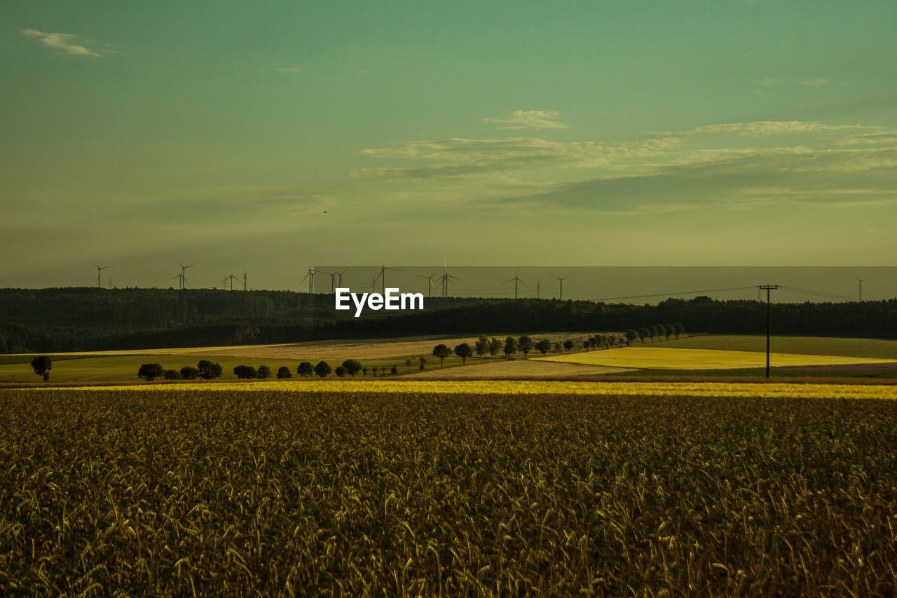 field, wind turbine, rural scene, wind power, fuel and power generation, alternative energy, landscape, renewable energy, nature, agriculture, windmill, environmental conservation, beauty in nature, no people, tranquil scene, sky, outdoors, tranquility, day, scenics, industrial windmill, technology, growth