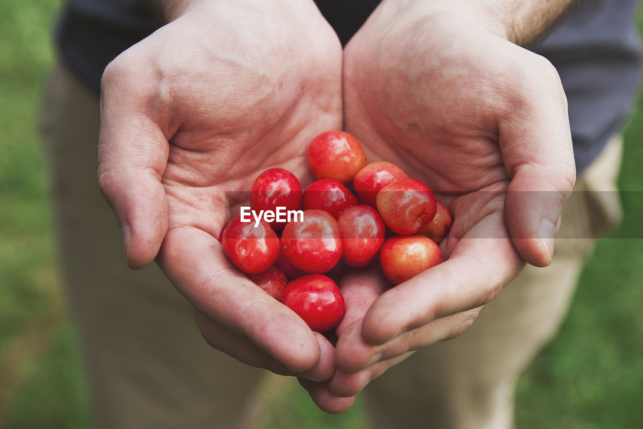 Cropped Hands Of Man Holding Cherry Tomatoes