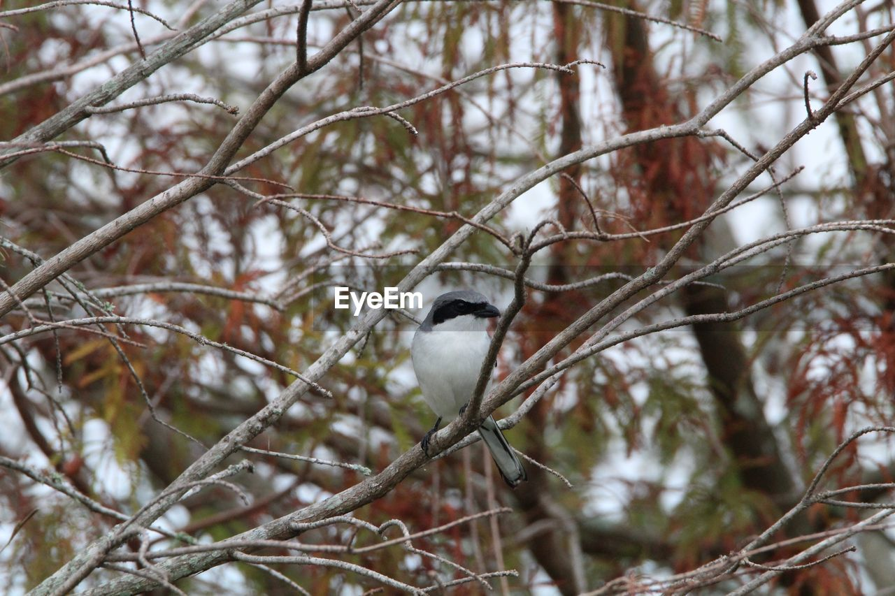 animals in the wild, one animal, bird, perching, animal themes, animal wildlife, focus on foreground, nature, branch, tree, day, no people, outdoors, winter, beauty in nature, close-up