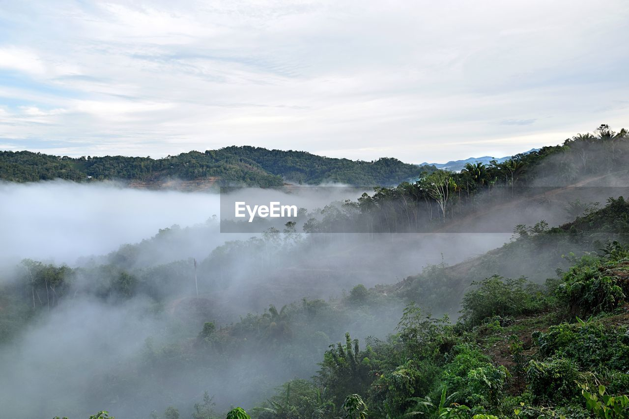 scenics - nature, beauty in nature, plant, tree, tranquil scene, non-urban scene, sky, cloud - sky, mountain, nature, fog, tranquility, no people, environment, day, growth, idyllic, land, remote, outdoors, hazy