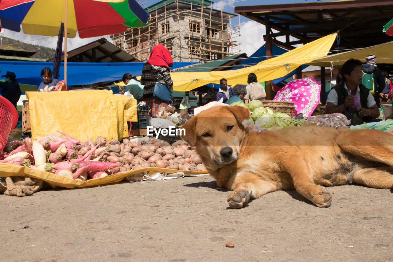 dog, pets, day, outdoors, domestic animals, mammal, men, sitting, real people, people