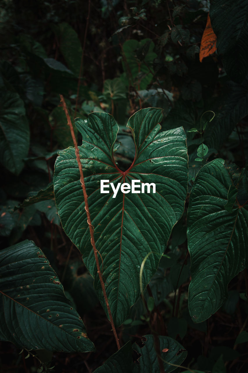 leaf, plant part, growth, green color, plant, close-up, beauty in nature, nature, no people, day, focus on foreground, freshness, outdoors, land, high angle view, tranquility, leaf vein, fragility, vulnerability, botany, leaves