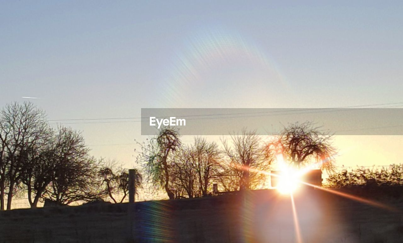 sky, tree, sun, plant, sunlight, sunset, nature, lens flare, tranquility, tranquil scene, beauty in nature, scenics - nature, no people, sunbeam, clear sky, outdoors, growth, non-urban scene, day, bare tree, bright, brightly lit