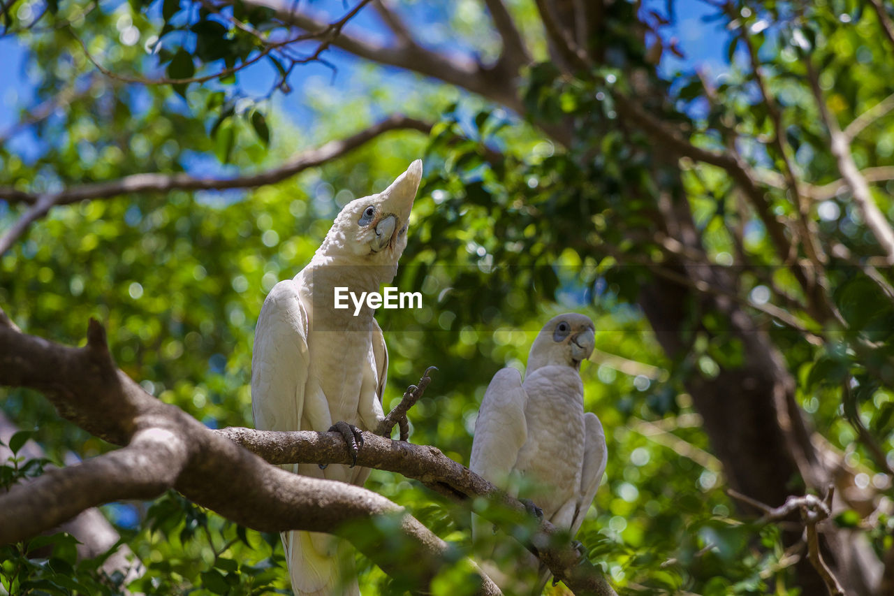 animal themes, vertebrate, animal, tree, bird, branch, animal wildlife, plant, perching, group of animals, animals in the wild, two animals, low angle view, nature, day, no people, focus on foreground, outdoors, parrot, selective focus