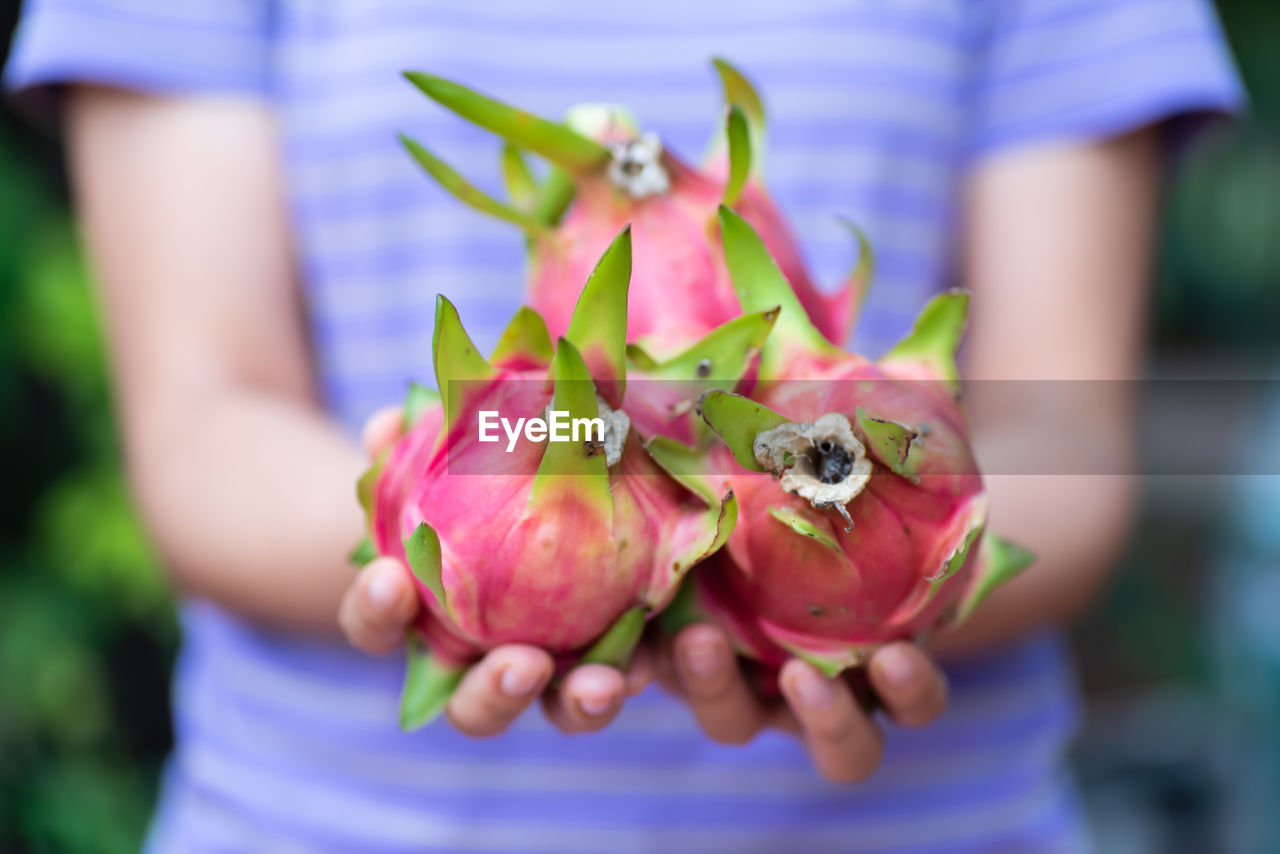 Midsection Of Woman Holding Pitaya