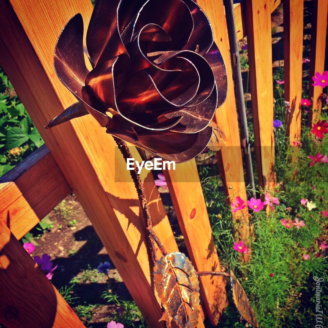 high angle view, wood - material, no people, day, plant, outdoors, flower, growth, close-up, nature