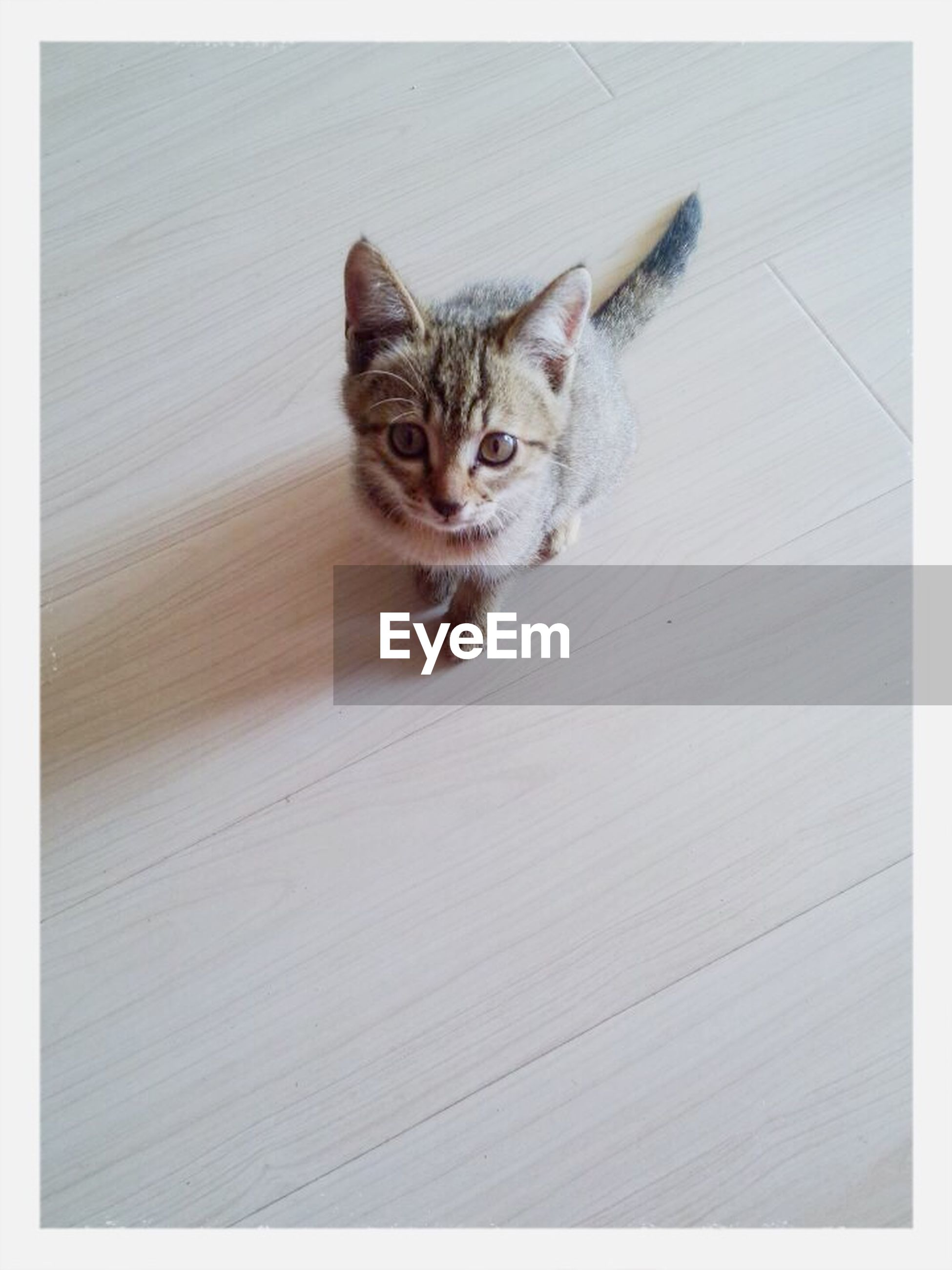 pets, domestic cat, domestic animals, cat, animal themes, one animal, mammal, feline, transfer print, auto post production filter, looking at camera, portrait, whisker, indoors, high angle view, relaxation, alertness, sitting, staring, zoology