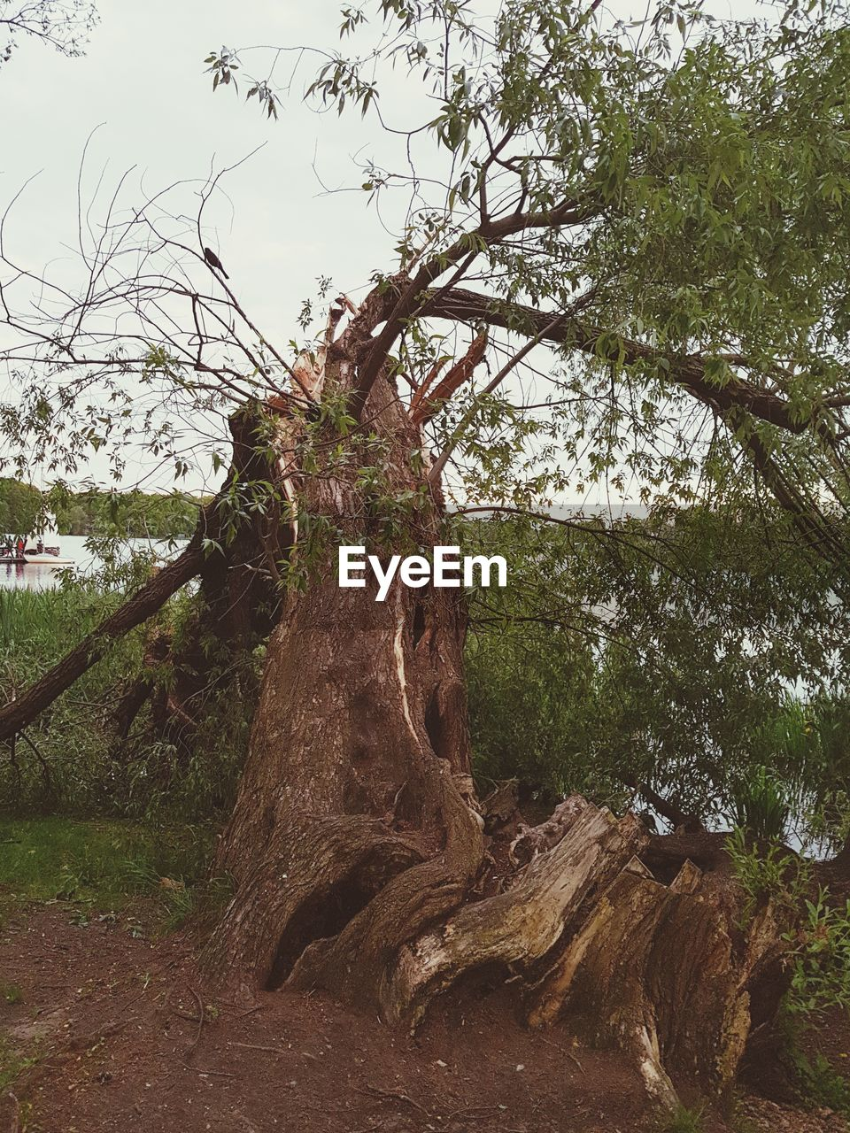 tree, nature, growth, tranquility, beauty in nature, branch, tranquil scene, day, outdoors, forest, no people, tree trunk, scenics, landscape, low angle view, plant, sky, grass, dead tree