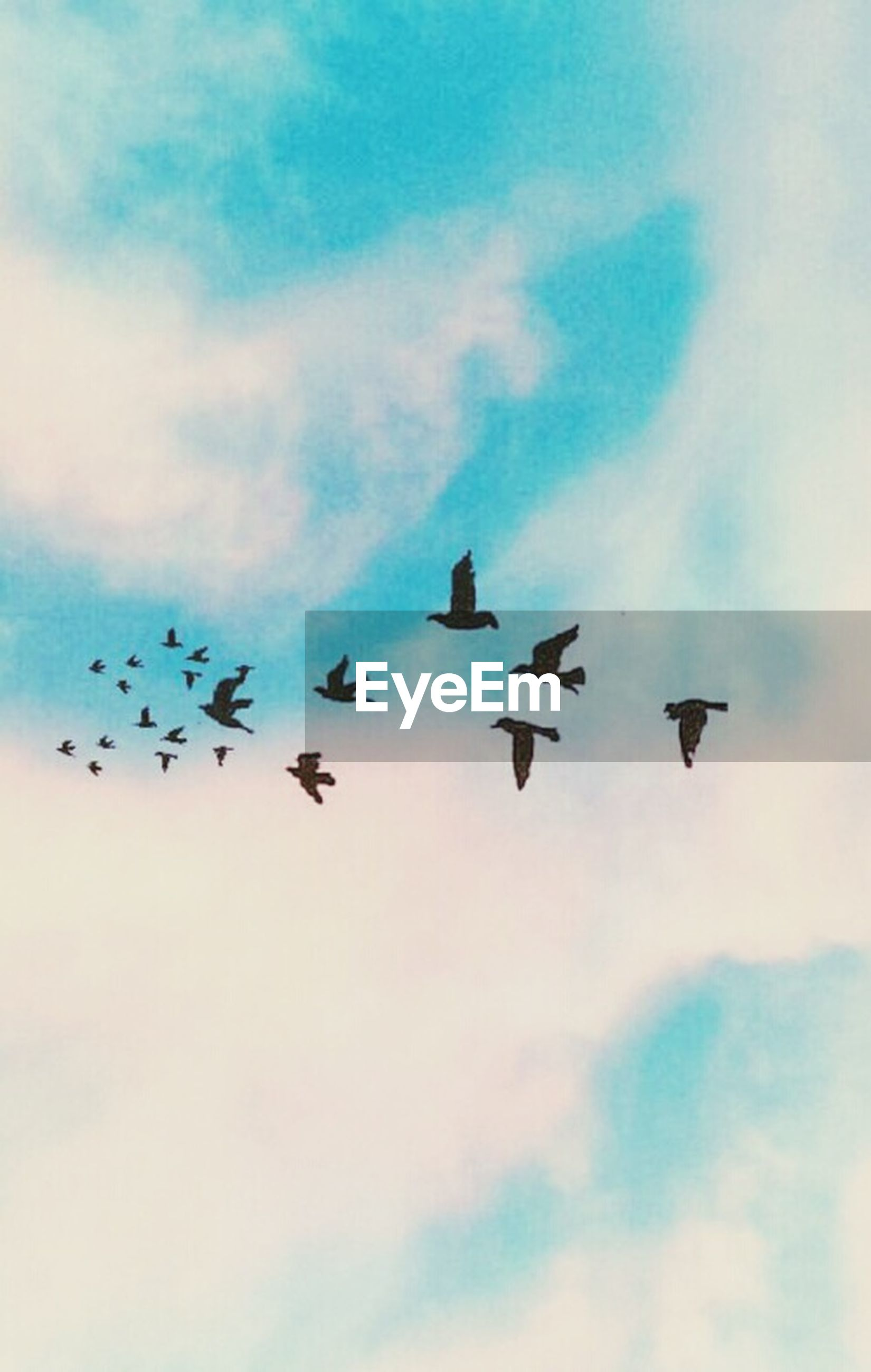 flying, bird, low angle view, animal themes, sky, animals in the wild, mid-air, wildlife, flock of birds, cloud - sky, spread wings, cloudy, silhouette, nature, cloud, outdoors, medium group of animals, blue, beauty in nature