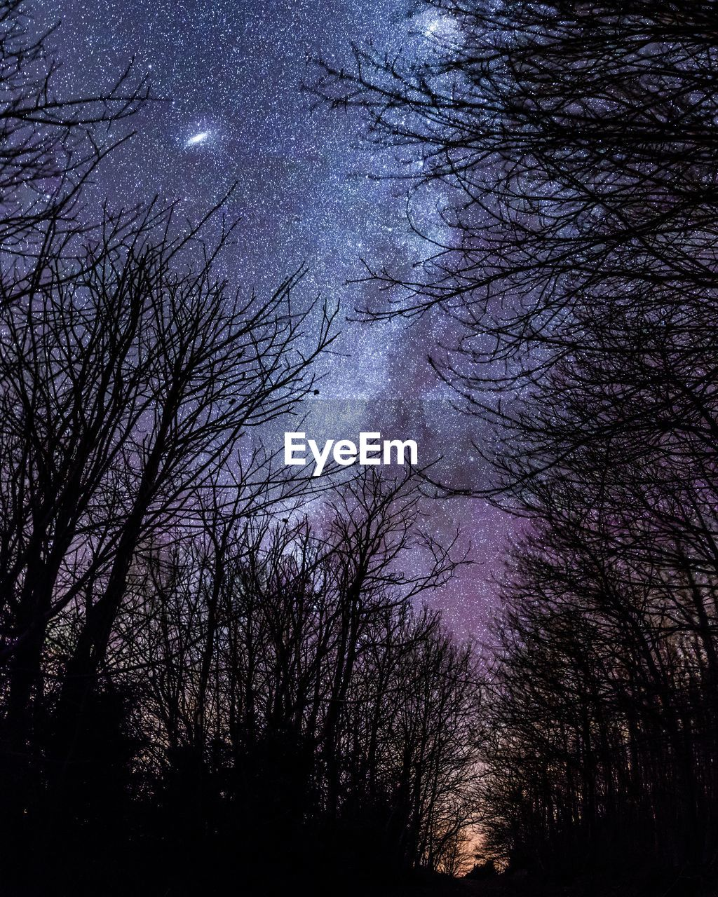 Bare trees against star field