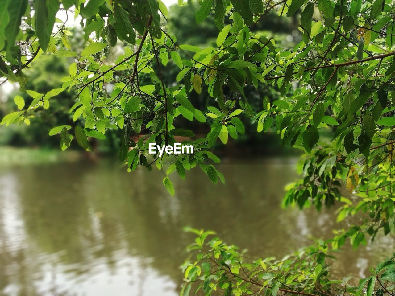 plant, water, green color, tree, growth, leaf, plant part, nature, beauty in nature, no people, tranquility, day, branch, lake, outdoors, focus on foreground, tranquil scene, scenics - nature