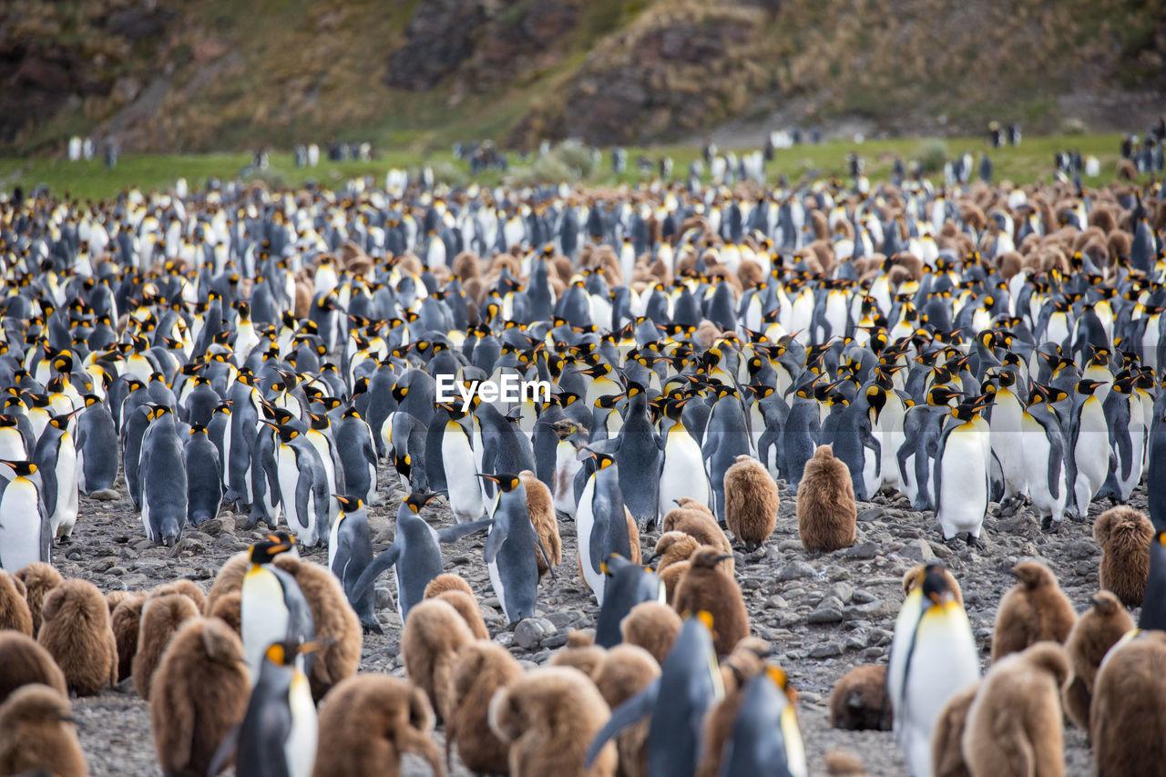 Flock Of Birds Perching On Land