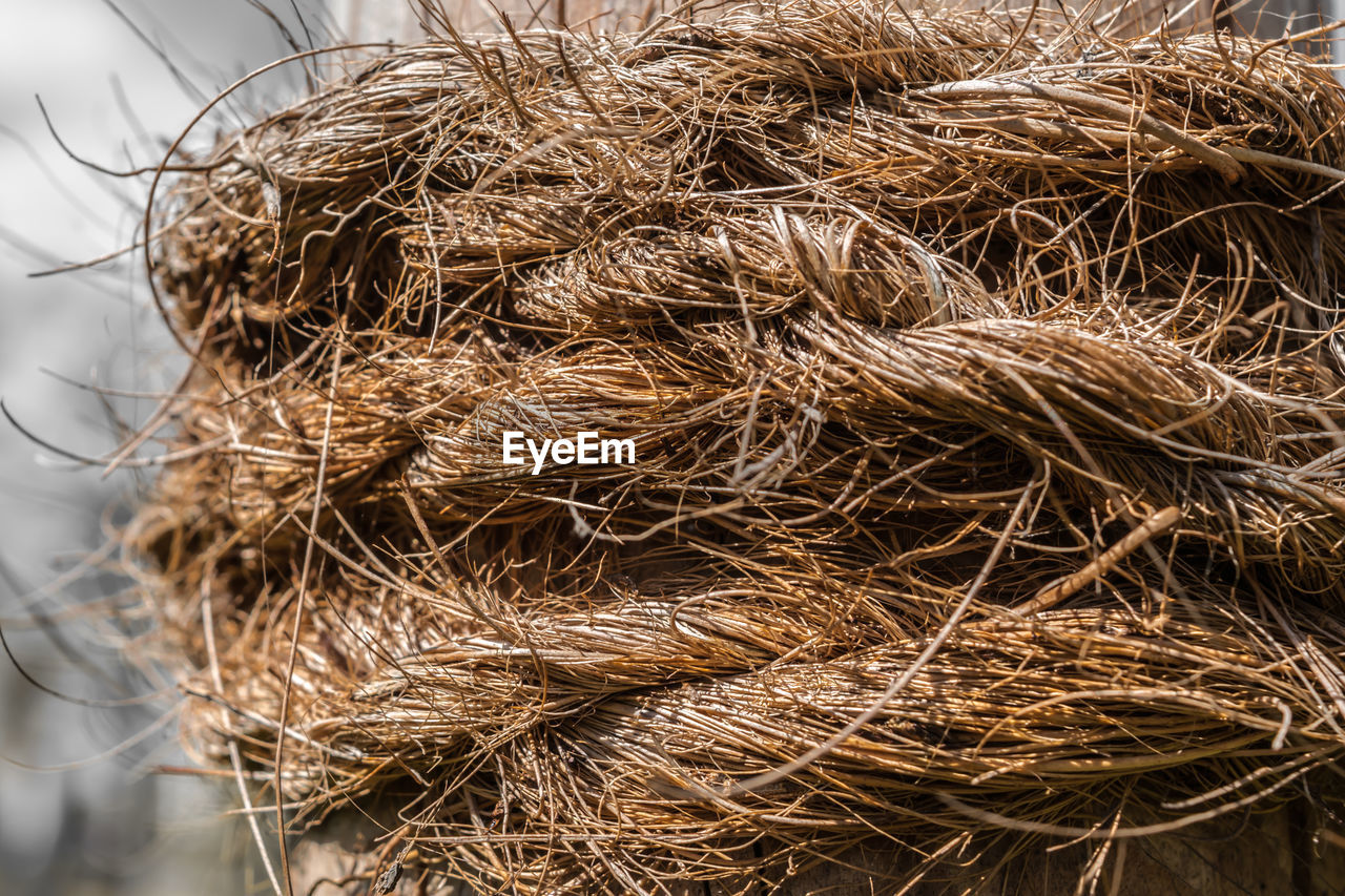 Close up of bird nest
