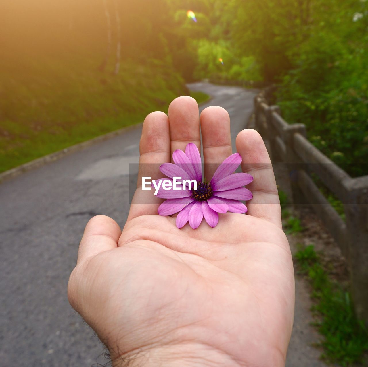 human hand, plant, flower, hand, human body part, flowering plant, personal perspective, one person, real people, freshness, fragility, vulnerability, beauty in nature, holding, body part, close-up, flower head, purple, day, nature, pink color, finger, outdoors, human limb