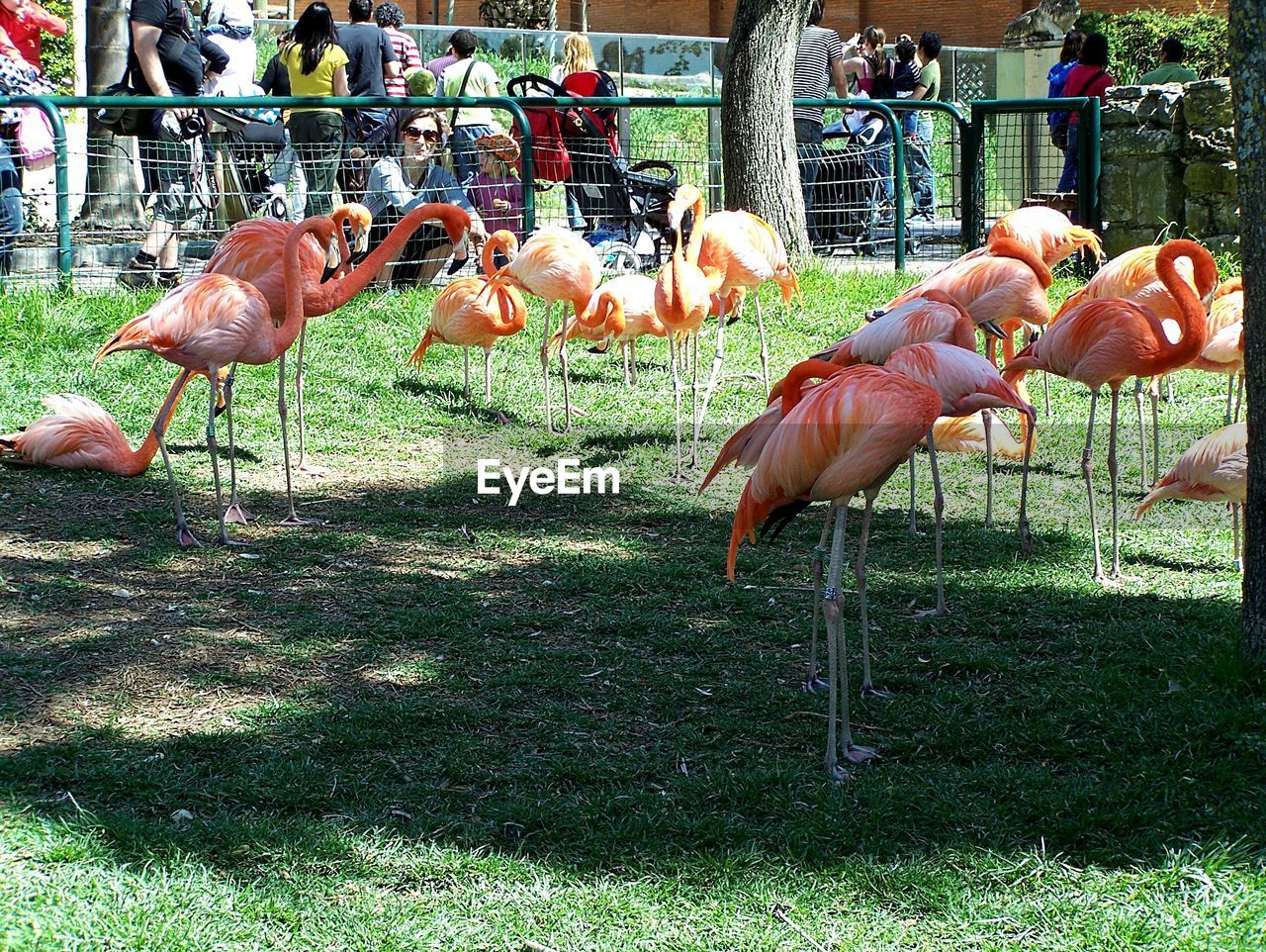 bird, group of animals, animals in the wild, vertebrate, animal themes, flamingo, animal, animal wildlife, grass, large group of animals, field, land, day, plant, nature, no people, outdoors, pink color, sunlight, flock of birds, animal neck