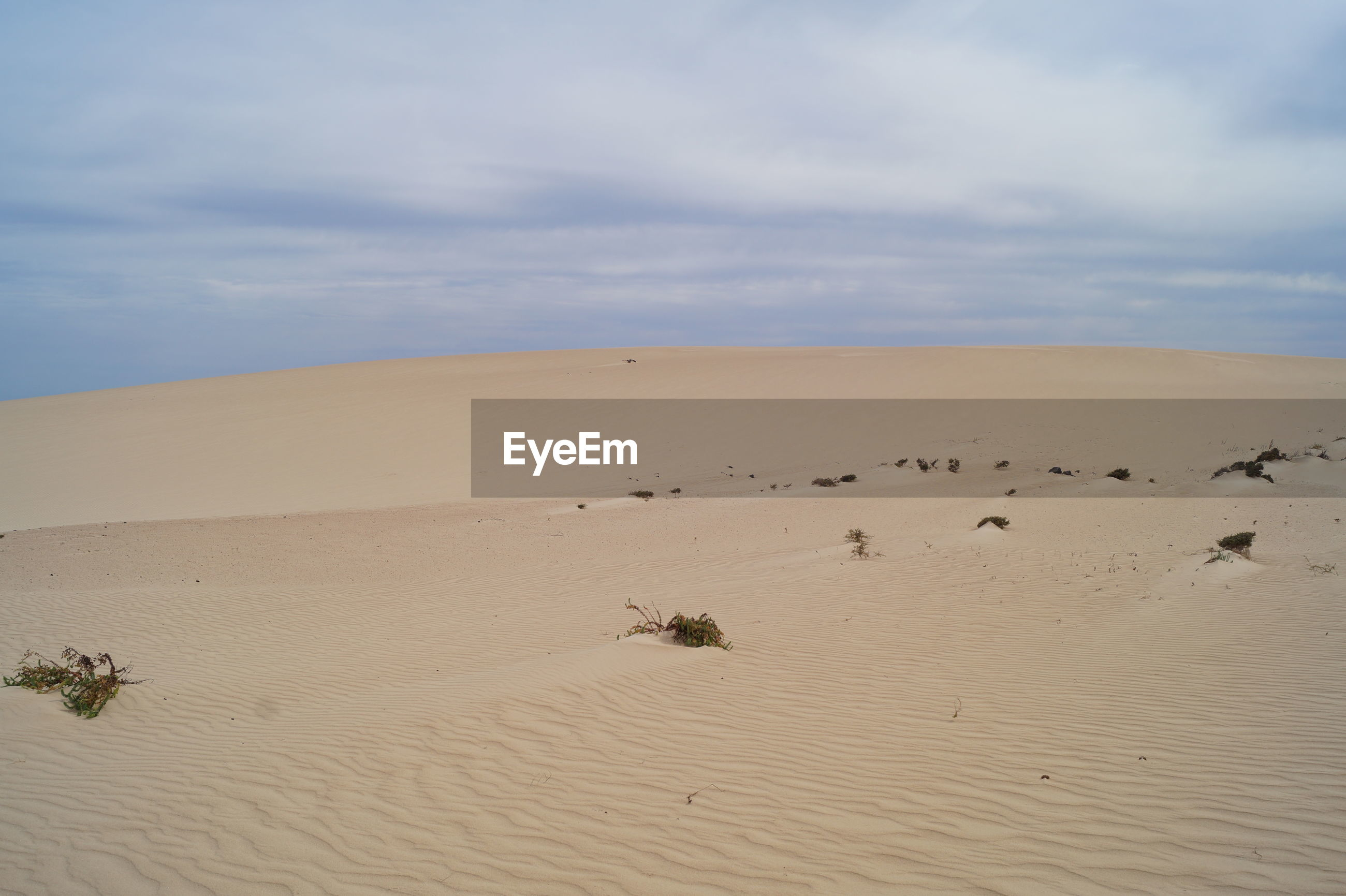 sand, sand dune, nature, sky, cloud - sky, tranquil scene, desert, tranquility, scenics, arid climate, landscape, day, outdoors, beauty in nature, no people, mammal, animal themes
