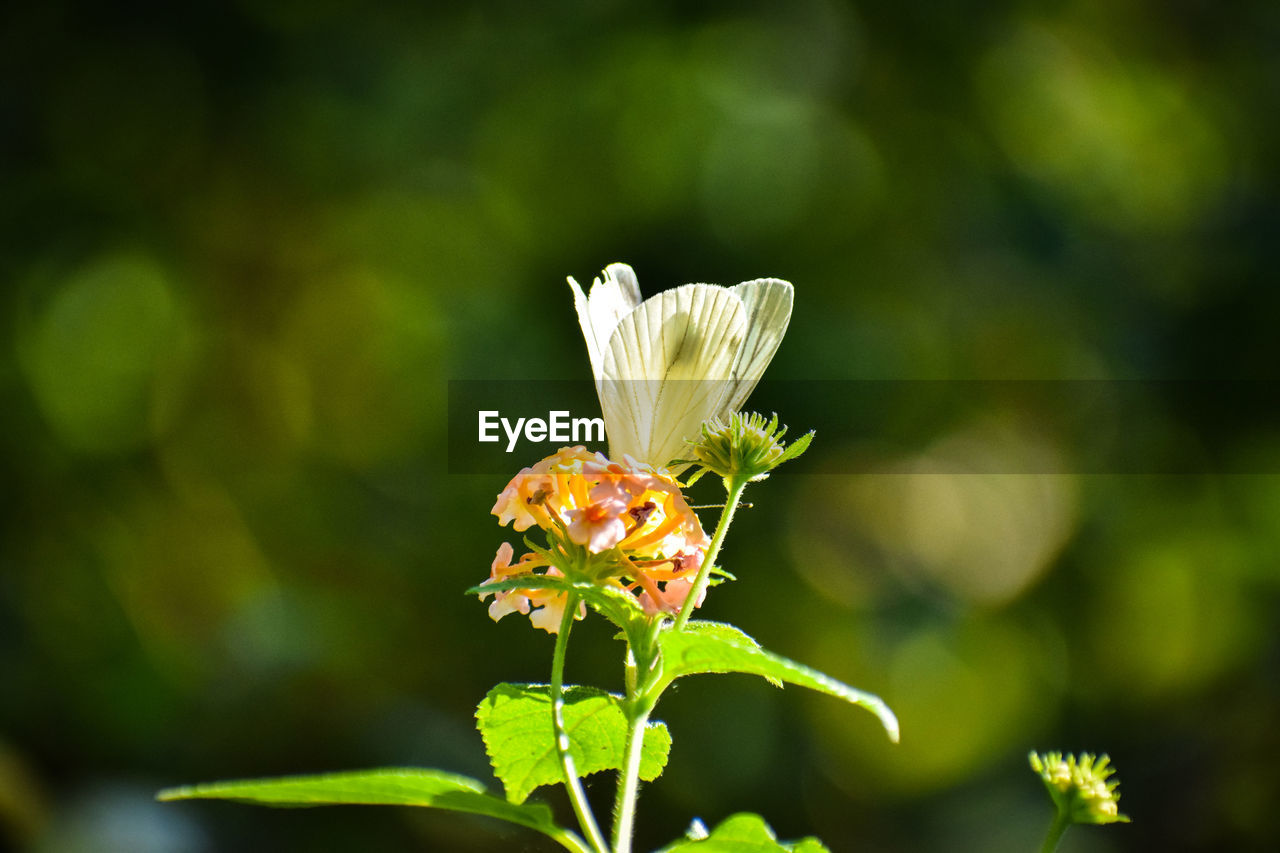 flowering plant, flower, plant, vulnerability, fragility, beauty in nature, growth, freshness, petal, close-up, flower head, inflorescence, nature, focus on foreground, no people, day, green color, pollen, botany, outdoors, pollination