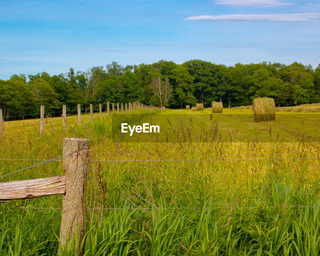 plant, tree, sky, landscape, land, grass, tranquility, tranquil scene, green color, field, beauty in nature, rural scene, nature, growth, no people, environment, wood - material, boundary, scenics - nature, fence, farm, outdoors, wooden post