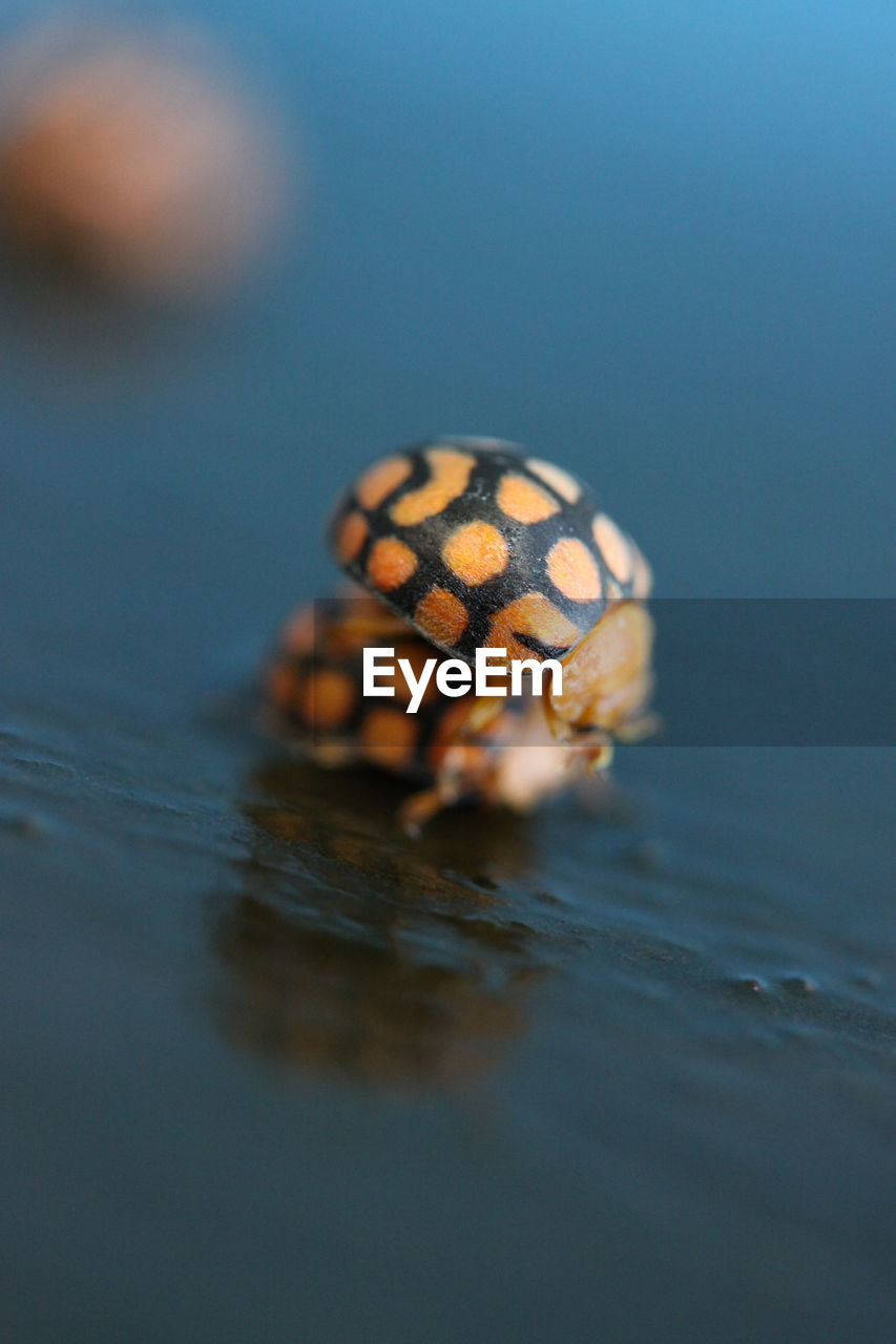 animal wildlife, one animal, animal themes, animal, animals in the wild, close-up, selective focus, water, waterfront, no people, reflection, nature, invertebrate, insect, outdoors, day, animal markings, animal body part, spotted, marine