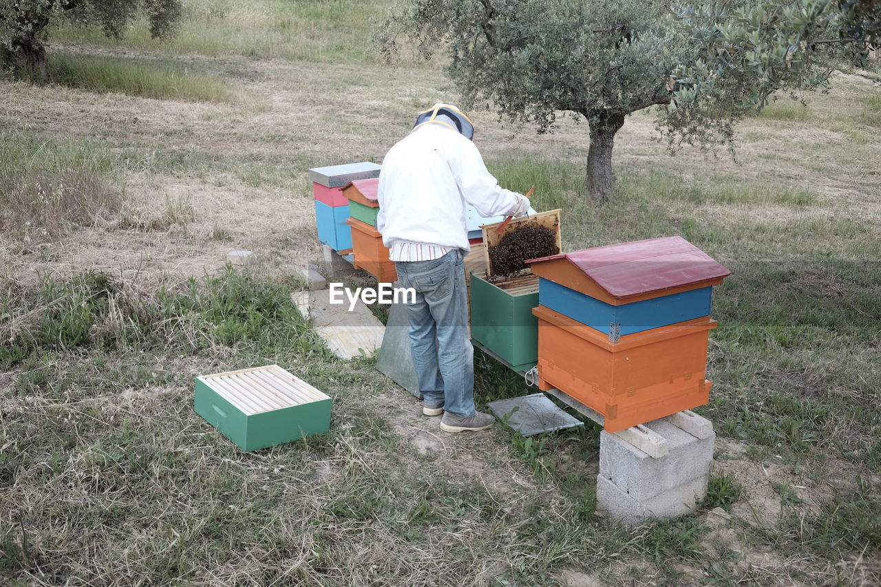 Rear View Of Beekeeper Examining Honeycomb While Standing On Field