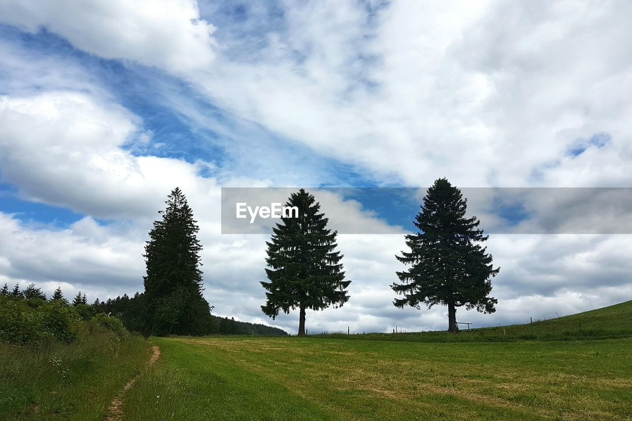 Trees growing on grassy field against cloudy sky