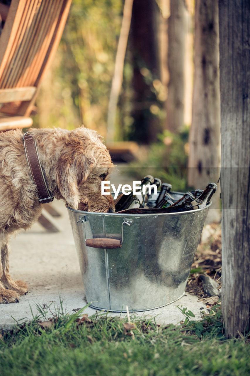 DOG ON GROUND IN BACKYARD